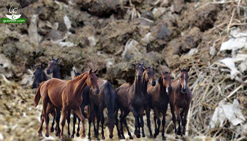 At gübresi ve faydaları