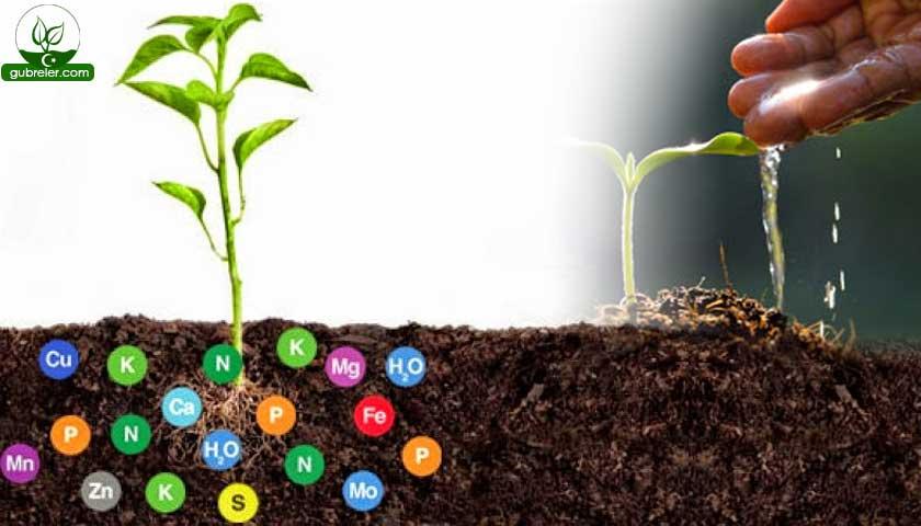 Bitki besleme ürünleri