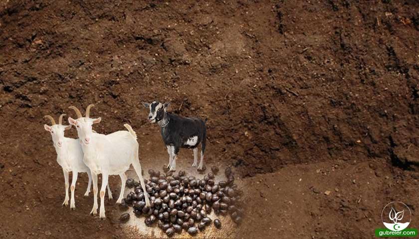 Keçi gübresi ve faydaları