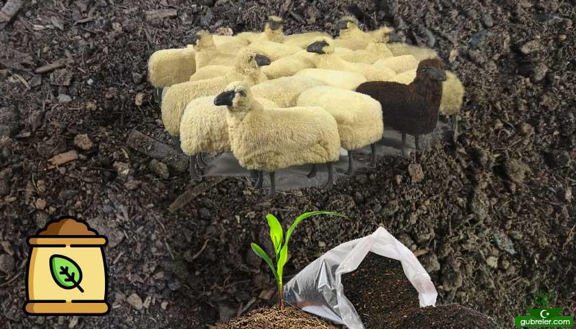 Koyun gübresi alım | satım