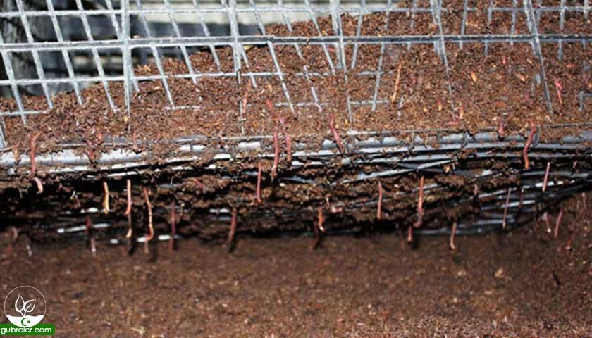 Solucan gübresi üretim