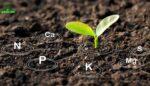 Toprak Analizi Nasıl Yapılır?