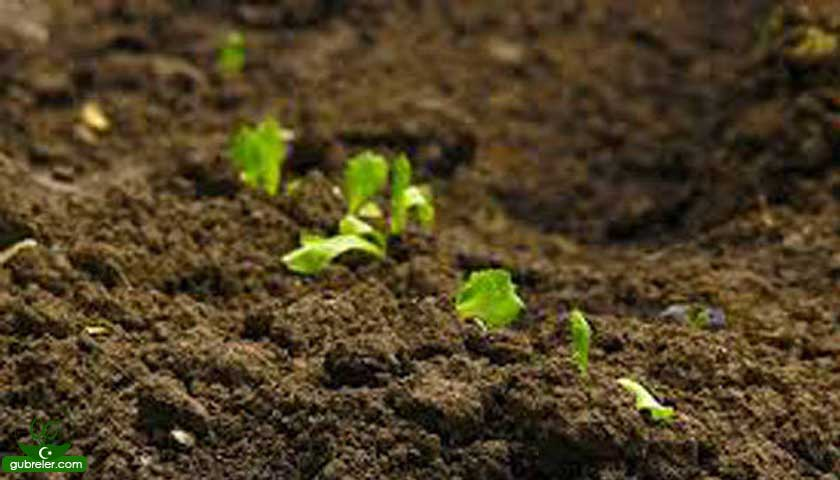 toprak ve yeşil bitkiler